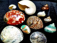 OBX Shell Store photo