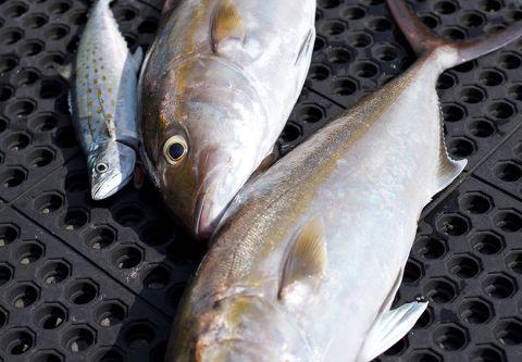 Sunset Watersports, Fishing Charters